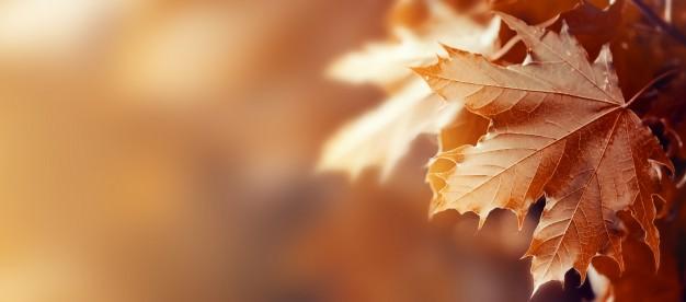 beautiful-autumn-leaves-on-autumn-red-background-sunny-daylight-horizontal_1220-1660